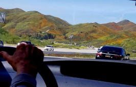 Driving I-15, viewing poppies in Walker Canyon